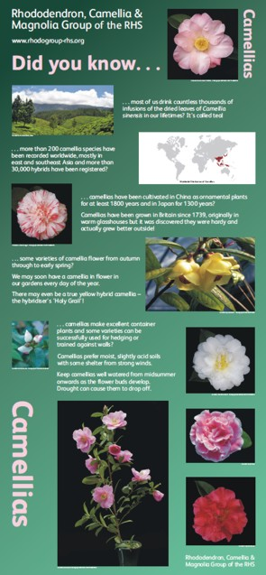 Graphic Words' Camellia display panel for the Rhododendron, Camellia and Magnolia Group  of the RHS