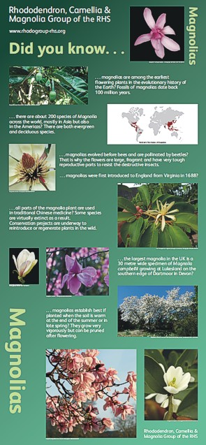 Graphic Words' Magnolia display panel for the Rhododendron, Camellia and Magnolia Group  of the RHS