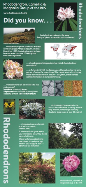 Graphic Words' Rhododendron display panel for the Rhododendron, Camellia and Magnolia Group  of the RHS